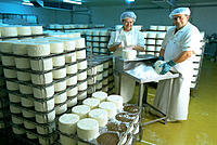 Salting fresh cheese, Roquefort, France