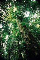 Australien Border Ranges Nationalpark Wald