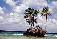 Coconut palms growing on an outcrop of rock near the shore in Katchal