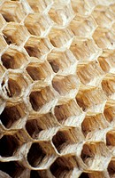 Detail of wasp honeycomb