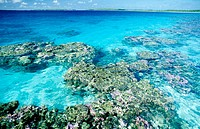 Coral reef in the transparent water of Manihi atoll lagoon. Tuamotu Islands. French Polynesia