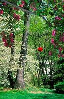 DogwoodFlowering Crab Trees