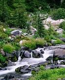 Summer wildflowers bloom along Paradise Creek below Mazama Ridge at summer. Mount Rainier National Park. Washington. USA