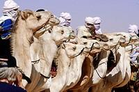 Tuareg men gathering for the yearly Sebiba Camels Race. Djanet Oasis. Tassili n´Ajjer desert. Sahara. South Algeria
