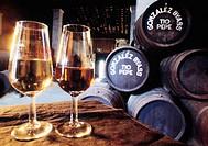 Sherry wineglasses at González Byass winery. Jerez de la Frontera, Cádiz province. Spain