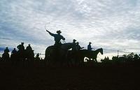 Horses warmed up at dawn. Tucson. Arizona. USA