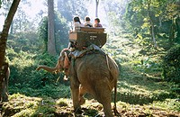 Elephant trekking. Chiang Mai. Thailand