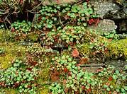 Vegetation on wall