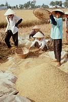 Travel, Vietnam, Farming & agriculture, Traditional farming