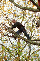Tree surgeon trimming a tree