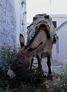 greece, sifnos, kastro, a mule