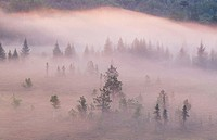 Morning light on mists and pines in beaver meadow. Walden. Ontario. Canada