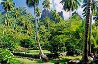 Me´ae (Moari temple) Tohua Hikokua. Hatiheu bay. Northern coast. Nuku Hiva island. The Marquesas archipelago. French Polynesia.