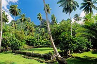 Me´ae (Maori Temple) Tohua Hikokua. Hatiheu bay. Nuku Hiva Island, northern coast. The Marquesas archipelago. French Polynesia.