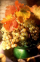 Chasselas grapes (suitable for wine or as table grapes)