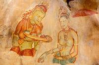 The Sigiriya damsels, rock frescoes. Sigiriya. Sri Lanka