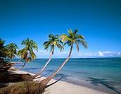 Playa Bonita beach. Samana, Dominican Republic