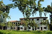 italy, veneto, marca trevigiana, treviso province, raboso vineyards