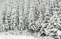 Snow. Gipuzkoa. Euskadi. Spain.