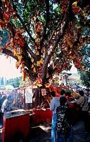 hong kong, the wishing tree