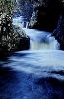 River flowing through a forest, Sainte_Suzanne, Reunion