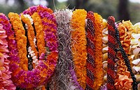 Assorted Hawaiian Leis, Hanging in bright, colorful strands.