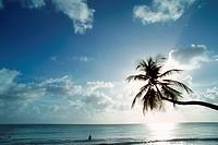 West Indies, Martinique, Anse des Salines