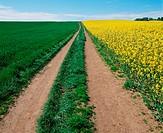Path through a field
