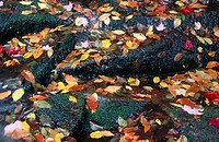 Leaves in autumn over green mossy rocks