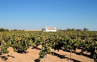 Shed and vineyard. Rota, Cádiz province. Andalusia, Spain