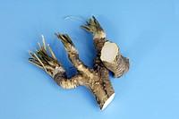 Horseradish Armoracia rusticana Germany