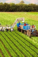 High angle view of people working on a farm, Los Angeles, California, USA
