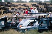 Tourists. Masai Mara Game Reserve. Kenya