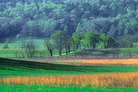 Fresh grasses and dead grasses in pasture at Cades Cove. Great Smoky Mountains NP. Tennessee. USA.