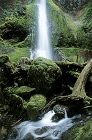 Marymere Falls Olympic National Park Washington USA