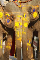 Close-up of two decorated elephants