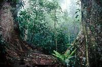 Cloud forest, Henri Pittier National Park, Venezuela