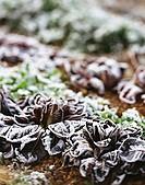 Lettuce with hoar frost in the field