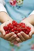 Hands holding redcurrants