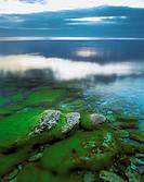 Stones in the sea, coastline in summer. Gotland. Sweden.