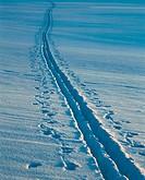 Ski tracks in snow. Närke. Sweden.