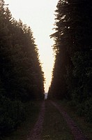 A gravel road between two timber edges