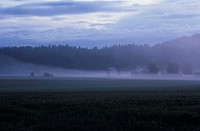 A misty field, Sweden