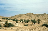 Olive and date trees matmata tunisia