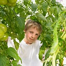 Boy surrounded by tomato plants
