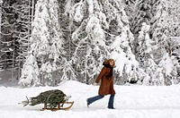 Young woman pulling sledge with Christmas tree, smiling, side view