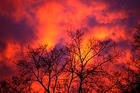 Glowing Twilight Clouds Silhouette Tree
