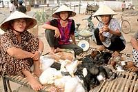 Market. Mekong Delta. Vietnam.