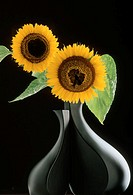Flower vase, sunflowers,   Vase black, plants, flowers, bloom heads, blooms, Petals yellow, summer flowers, garden flowers,  Prime, nature, Floristik,...