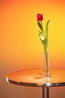 Tulip in Vase on Pedestal Table